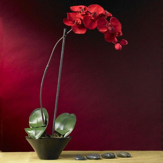 Nearly Natural Holiday Phalaenopsis Orchid with Dish