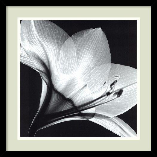 Amanti Art 'Amaryllis 1' by Steven N. Meyers Framed Photographic Print