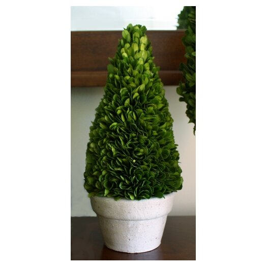 Mills Floral Green Boxwood Cone Topiary in Pot