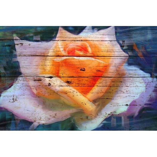 'Blush Rose III' Painting Print