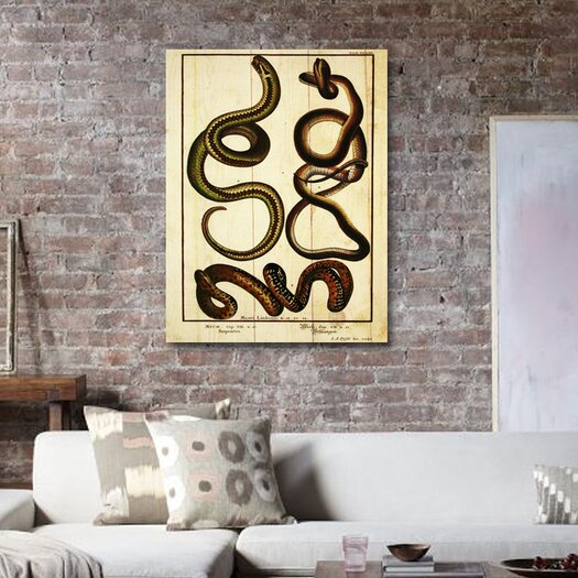 """Oliver Gal Canyon Gallery """"""""Snakes II"""""""" Graphic Art on Canvas"""