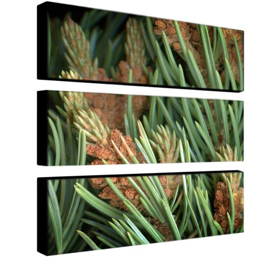 "Trademark Fine Art ""Pinion"" by Aiana Photographic Print 3 Panel Art Set"