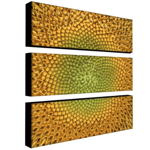 "Trademark Fine Art ""Sunflower"" by Aiana Photographic Print 3 Panel Art Set"