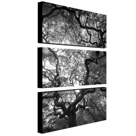 "Trademark Fine Art ""Speaking"" by CATeyes Photographic Print 3 Panel Art Set"