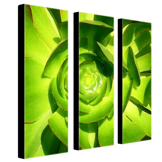 Trademark Fine Art Succulent Square by Amy Vangsgard 3 Piece Painting Print Set