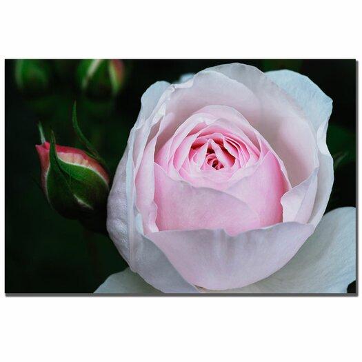Trademark Fine Art 'Pink Rosebud' by Kurt Shaffer Photographic Print on Canvas
