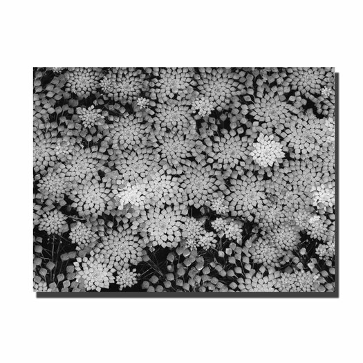 Trademark Fine Art 'Pattern on a Pond II' by Kurt Shaffer Photographic Print on Wrapped Canvas