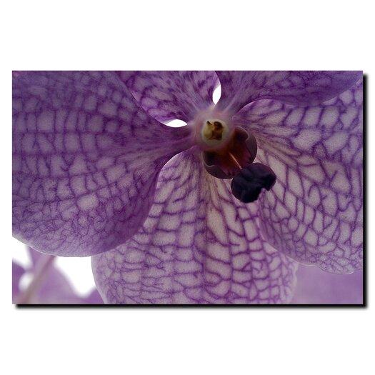 Trademark Fine Art 'Orchid Veins' by Kurt Shaffer Photographic Print on Canvas