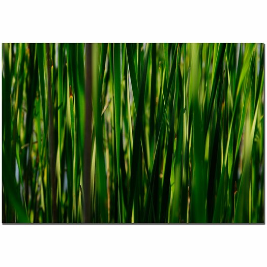Trademark Fine Art 'Prairy Grass II' by Kurt Shaffer Photographic Print on Canvas