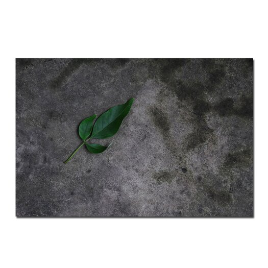 """Trademark Fine Art """"Just a Leaf on a Rock """" by Kurt Shaffer Photographic Print on Wrapped Canvas"""