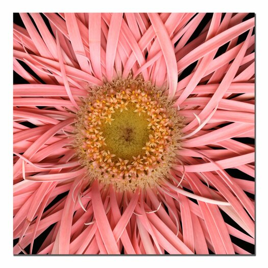 """Trademark Fine Art """"Pink Spider"""" by Aiana Photographic Print on Canvas"""