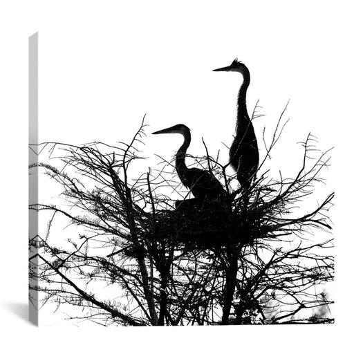 "iCanvas ""Birds Nesting"" Canvas Wall Art by Harold Silverman"