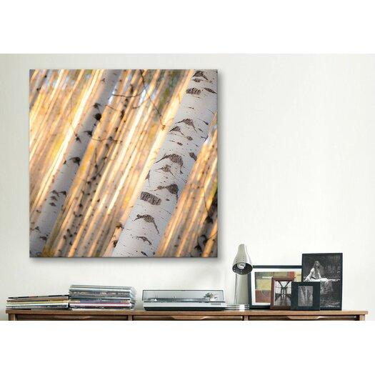 "iCanvas ""Aspen Light"" Canvas Wall Art by Dan Ballard"