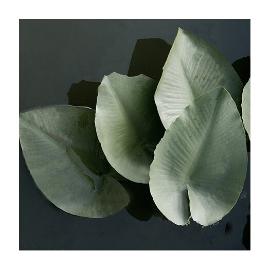 """iCanvas """"Lilies in a Grouping"""" Canvas Wall Art by Harold Silverman - Foilage and Greenery"""