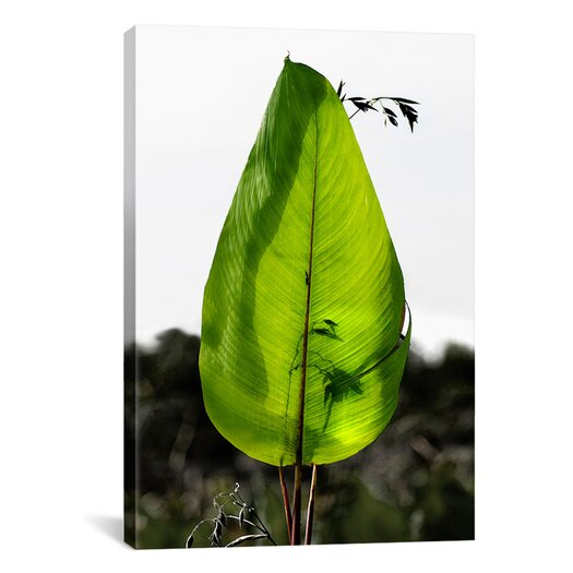 "iCanvas ""Single Leaf Beauty' by Harold Silverman - Foilage and Greenery Photographic Print on Canvas"