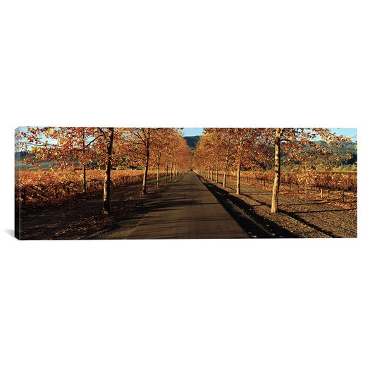 iCanvas Panoramic Vineyards Along a Road, Beaulieu Vineyard, Napa Valley, California, USA Photographic Print on Wrapped Canvas