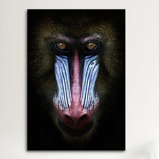 iCanvas SD Smart 'Mandrill' Photographic Print on Canvas