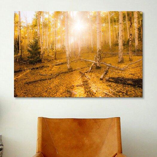 iCanvas 'Fall Light' by Dan Ballard Photographic Print on Canvas