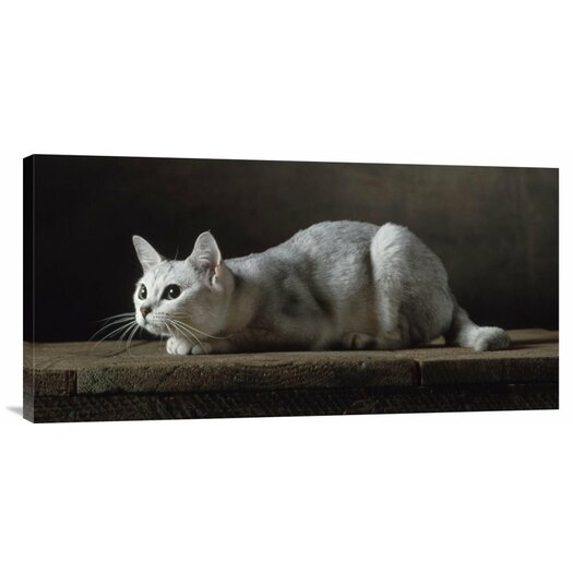 Bentley Global Arts 'Silver Burmilla Cat' by Yann Arthus-Bertrand Photographic Print on Canvas