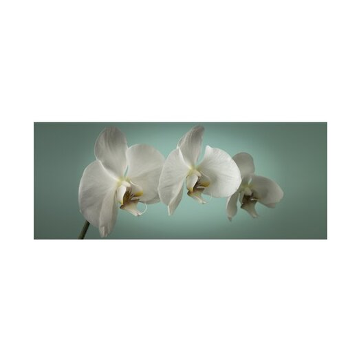 'Teal Orchid' Photographic Print on Wrapped Canvas