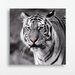 Eurographics Tiger with Blue Eyes Photographic Print Glass Wall Art