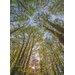 Komar Canopy 2.54m L x 184cm W 4 Pieces Roll Wallpaper