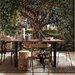 Komar Olive Tree 2.54m L x 368cm W Roll Wallpaper