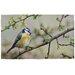 Fallen Fruits Blue Bird Printed Doormat