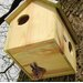 Fallen Fruits Best for Birds Squirrel House