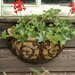 Fallen Fruits Esschert's Garden Half Round Wall Mounted Planter