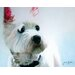 Art Group Jack by Jane Booth Canvas Wall Art