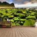 The Binary Box Mossy Shore Self Adhesive Wallpaper