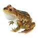 Design Toscano Puffy Necked Frog Statue