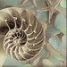 Alan Blaustein La Playa Nautilus Photographic Print on Canvas