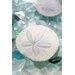 Alan Blaustein Sea Glass with Sand Dollars 2 Photographic Print on Canvas