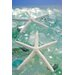 Alan Blaustein Sea Glass with Starfish 3 Photographic Print on Canvas