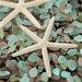 Alan Blaustein Sea Glass with Starfish 1 Photographic Print