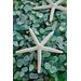 Alan Blaustein Sea Glass with Starfish 2 Photographic Print on Canvas