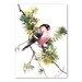 Americanflat Bullfinch II by Suren Nersisyan Art Print