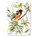 Americanflat 'Baltimore Oriole' by Suren Nersisyan Art Print Wrapped on Canvas