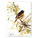 Americanflat 'Baltimore Oriole II' by Suren Nersisyan Art Print Wrapped on Canvas