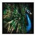 Artist Lane 'Splendour' by Andrew Paranavitana Photographic Print Wrapped on Canvas