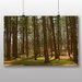 Alpen Home Tall Tree Forest Photographic Print