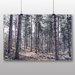 Alpen Home Sparse Forest Photographic Print