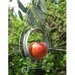 Home Etc Apple Bird Feeder