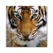 Home Etc YoungOnes Tiger Photographic Print