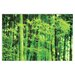 House Additions Bamboo in Spring Photographic Print Plaque