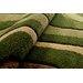 Home & Haus Garnet Green Area Rug