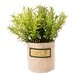 Clementine Creations Faux Round Rosemary Garden Pot