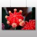 Big Box Art Cactus Flower No.2 Photographic Print